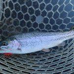 釣りのできない冬は管理釣り場で癒される。初めての菅釣り釣行