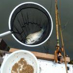 2年ぶりに楽しむ下条ダムでのヘラ釣り