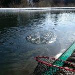 柏崎市の管釣り【パスタイム】での釣果