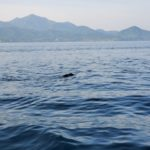 船釣り中に泳ぐ〇〇を発見